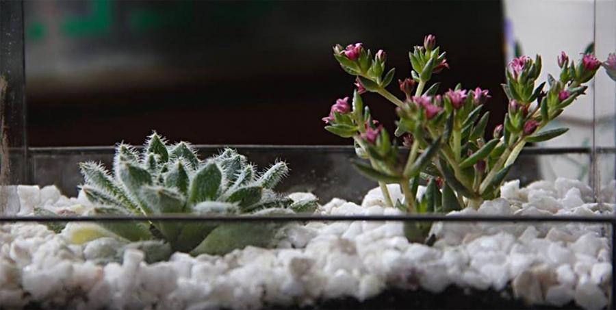 Plantas y flores para regalar