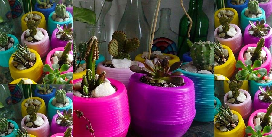 Cactus y suculentas naturales